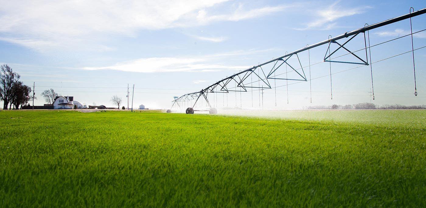 Farm Grass Photo